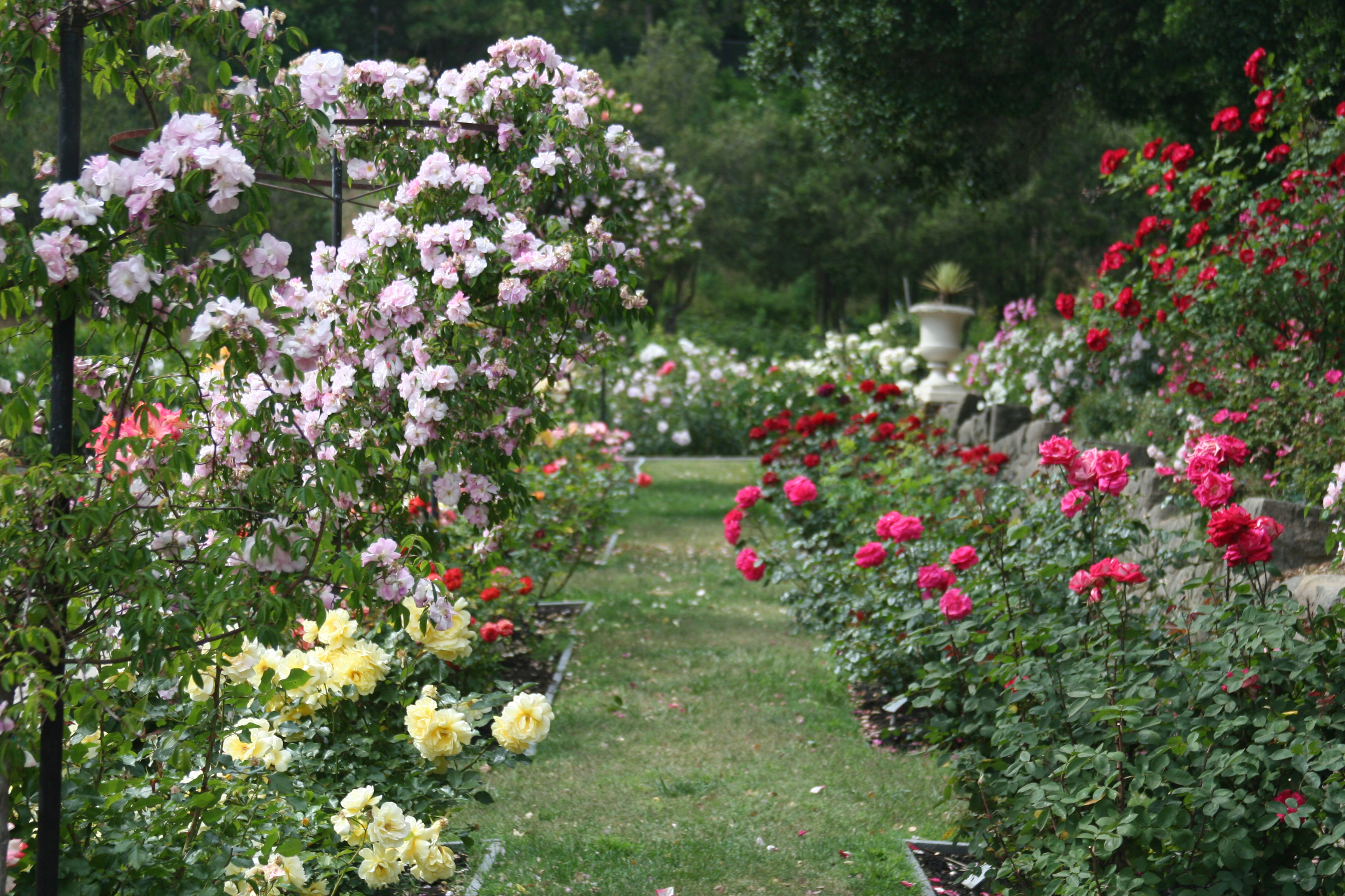 Rose Garden Ideas For A Small Yard Photograph Secluded Spa