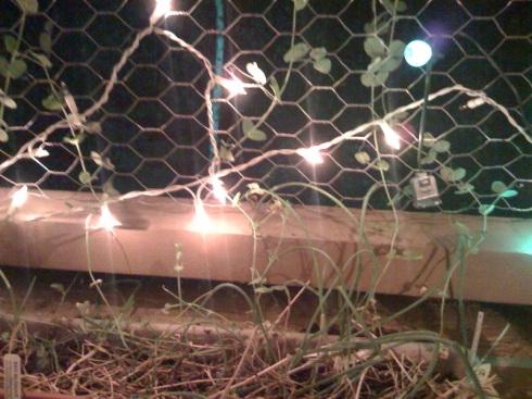 christmas-lights-plants-1