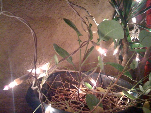 christmas-lights-plants-2