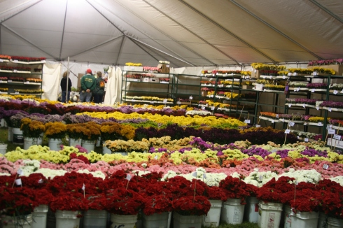 rose-parade-floats-135