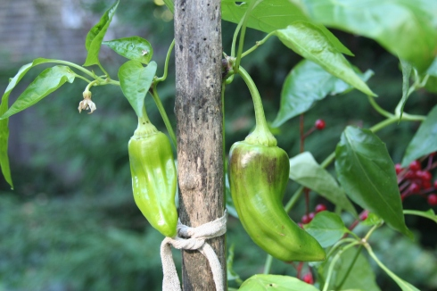 Big Peppers