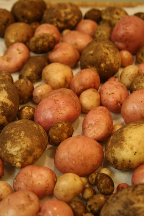 Potato Mosaic 2